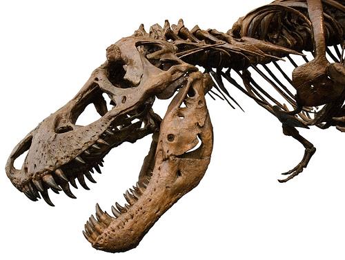 b2b marketing dinosaur